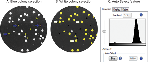A Example Blue Colonies Selected With Auto Select Are Indicated Arrows B White