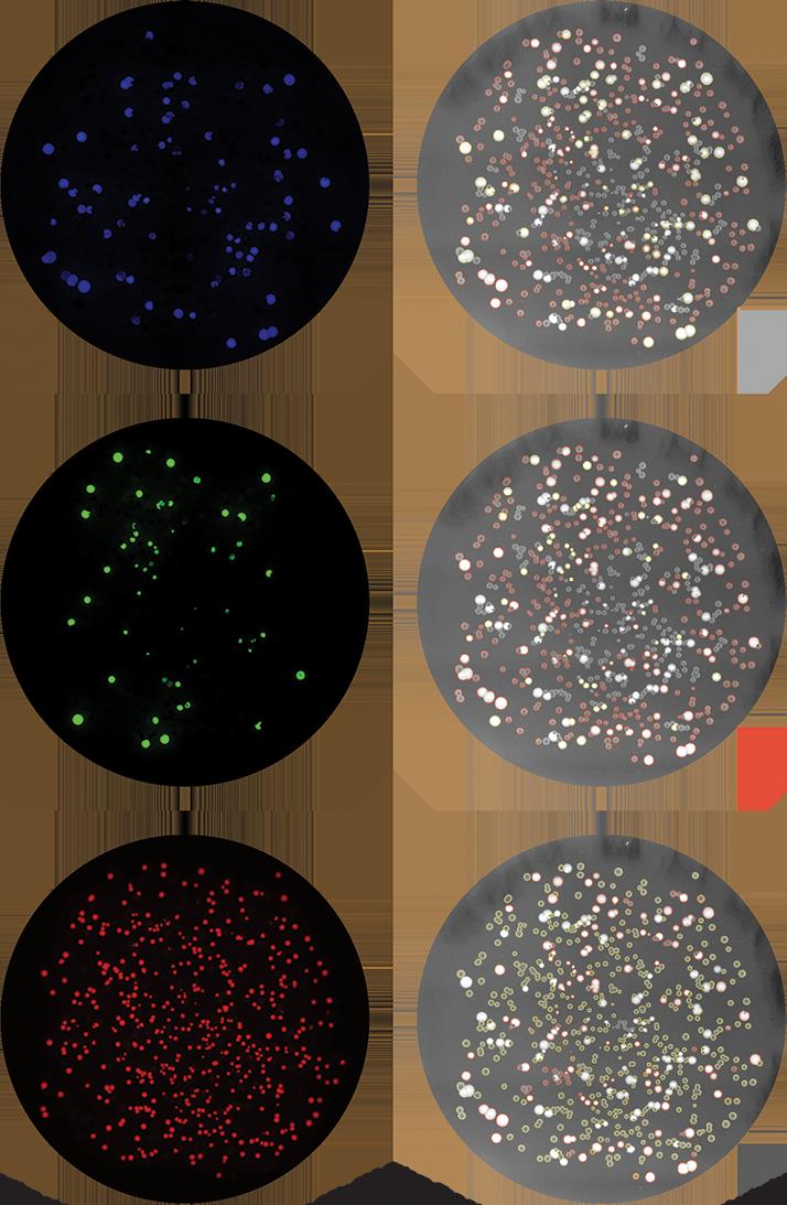 Expanded fluorescence screening using QPix 400 series | Molecular ...