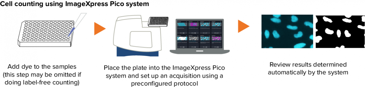 Cell counting using automated cell imaging workflow