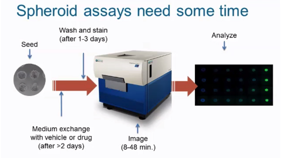 3D Spheroid Assays Using High-Content Imaging