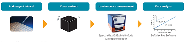 SpectraMax Glo Steady-Luc Reporter Assay Kit Workflow