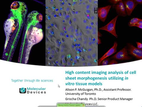High Content Imaging Analysis of Cell Sheet Morphogenesis Utilizing in Virto Tissue Models