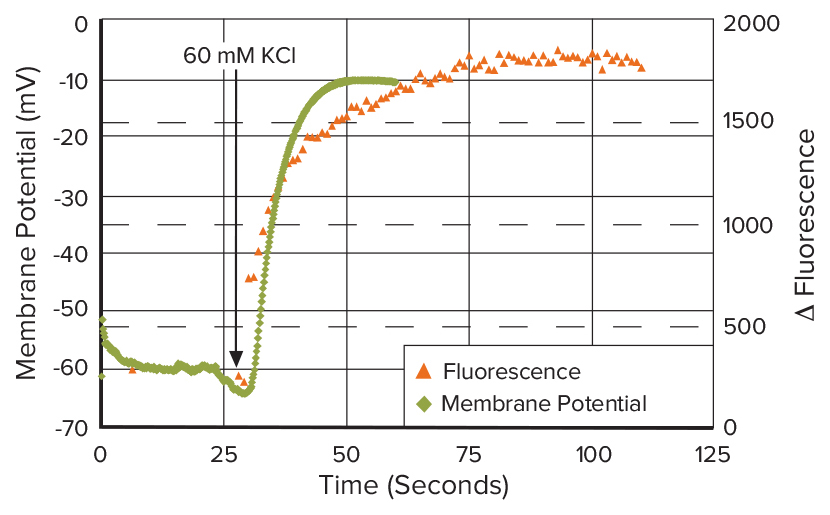 Patch Clamp vs FLIPR Membrane Potential Assays