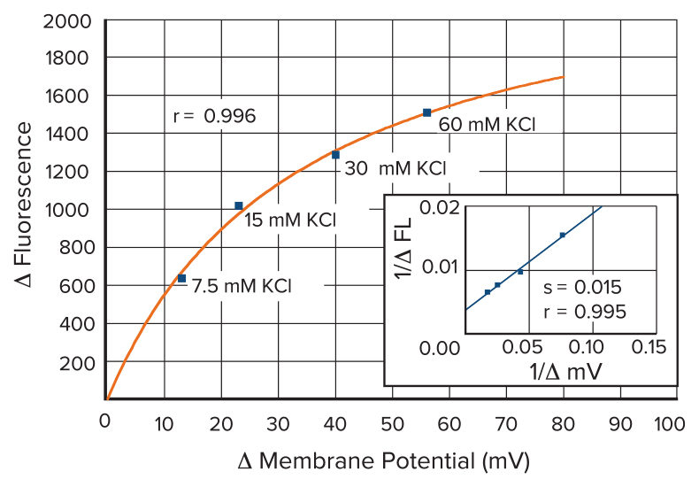Fluorescence vs Membrane Potential Change