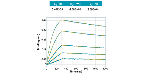 Kinetic characterization and clone selection