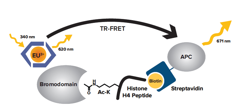 Assay schematic for the BRD4 bromodomain 1 TR-FRET Assay Kit