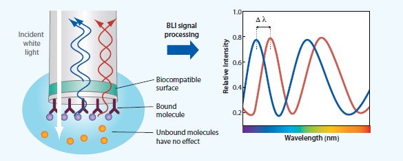 Bio-Layer Interferometry