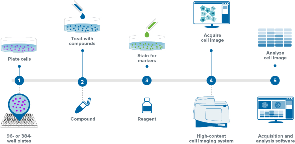 cell-imaging-workflow