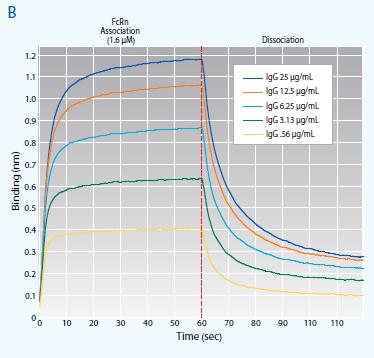 Analysis of FcRn-Antibody Interactions on the Octet Platform