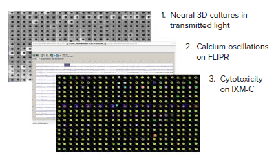 Multiparametric workflow - Kinetic and Cellular Imaging Analysis