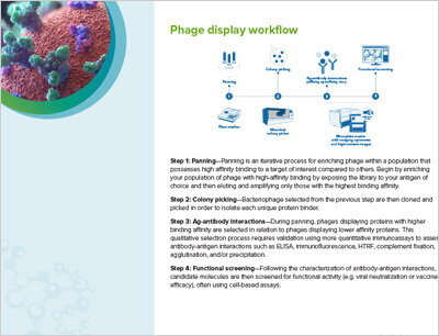 Phage Display Workflow