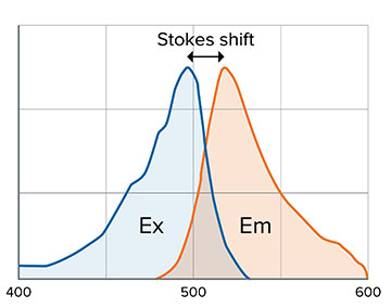 Stokes shift and fluorophore dependent