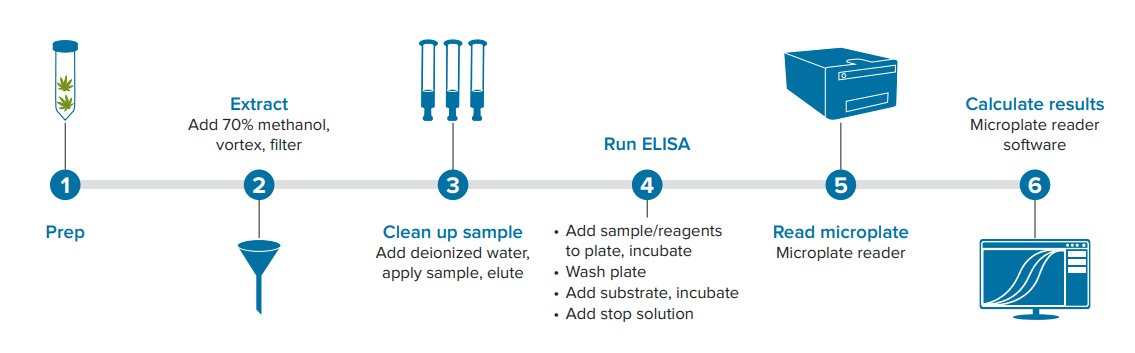 Workflow for cannabis sample processing and ELISA