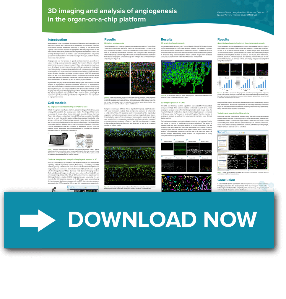 3D imaging and analysis of angiogenesis
