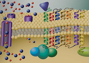GPCRs and Ion Channels