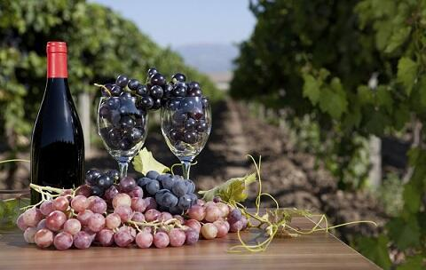 Phenolic compounds measurement in red wines