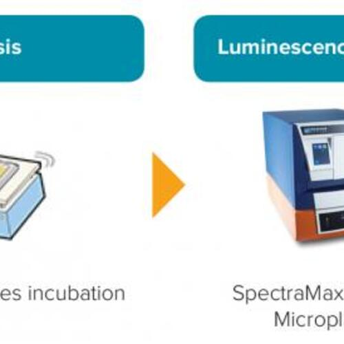 Experimental Workflow for Dual Luciferase Assay
