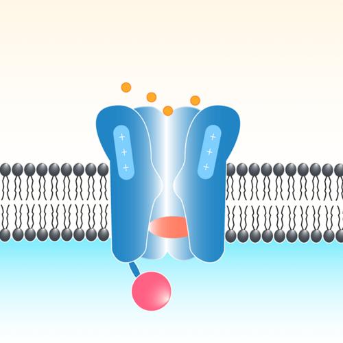 free mechanosensitive ion channels part