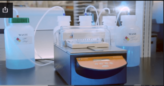ELISA Workflow using the EMax plus Microplate Reader