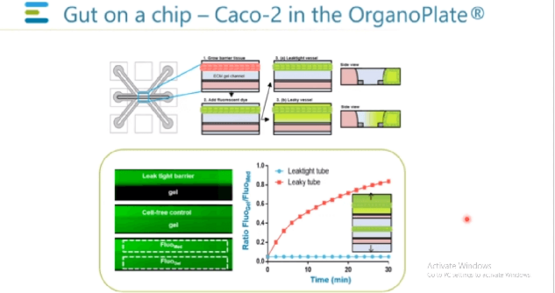 Developing High Throughput Organ on a Chip Tissue