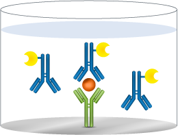 add detection antibody mobile